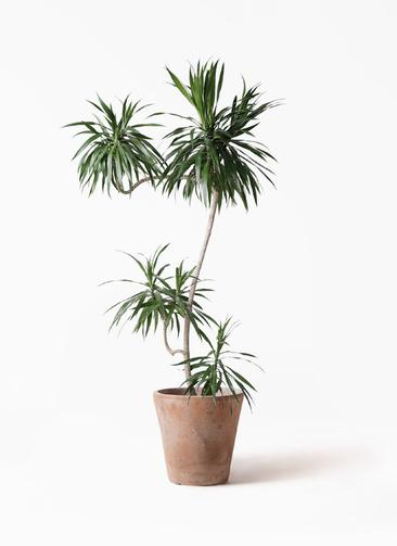 観葉植物 ドラセナ ナビー 8号 L字 ルーガ アンティコ ソリッド 付き
