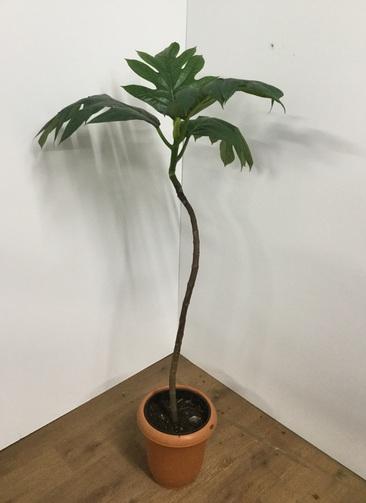 観葉植物 【130cm】パンノキ 8号 #21778