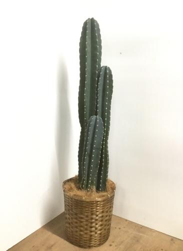 観葉植物 【150cm】【鉢カバー付】柱サボテン 10号 #22038
