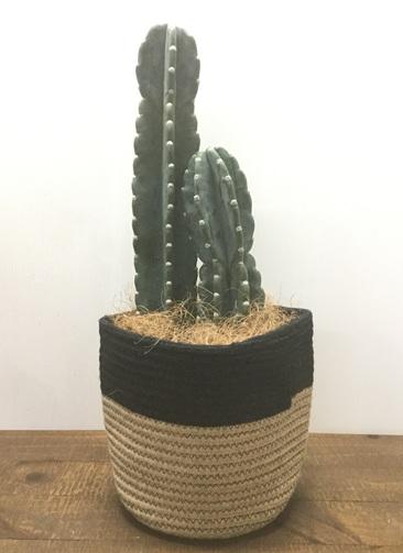 観葉植物 【60cm】【鉢カバー付】柱サボテン 6号 #22128