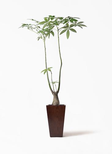 観葉植物 パキラ 8号 パラソル MOKU スクエア 付き
