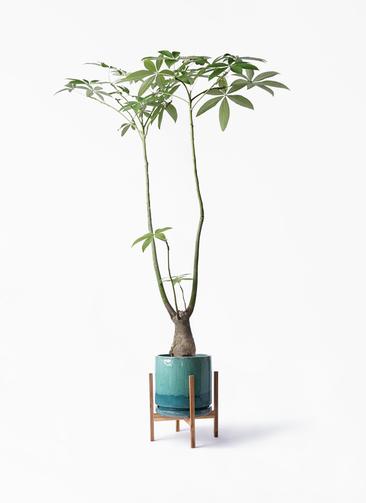 観葉植物 パキラ 8号 パラソル ビトロ エンデガ ターコイズ ウッドポットスタンド付き