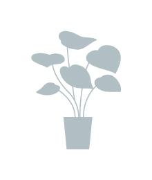 お洒落な植物をご提案