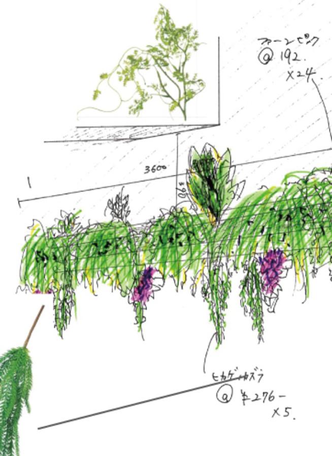 観葉植物  珍しい観葉植物 1点もの 観葉植物 取引店様発注専用(見積もり別途)