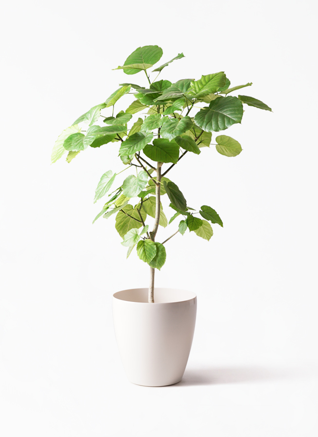 観葉植物①