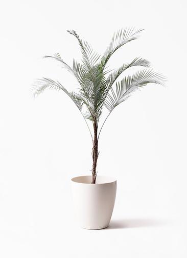 観葉植物 ヒメココス 8号 ラスターポット 付き
