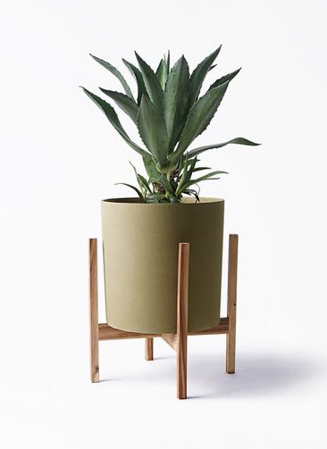 観葉植物 アガベ 8号 アメリカーナ ホルスト シリンダー オリーブ ウッドポットスタンド付き