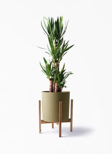 観葉植物 ユッカ 8号 ノーマル ホルスト シリンダー オリーブ ウッドポットスタンド付き