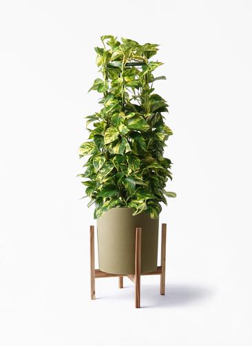 観葉植物 ポトス 8号 ホルスト シリンダー オリーブ ウッドポットスタンド付き