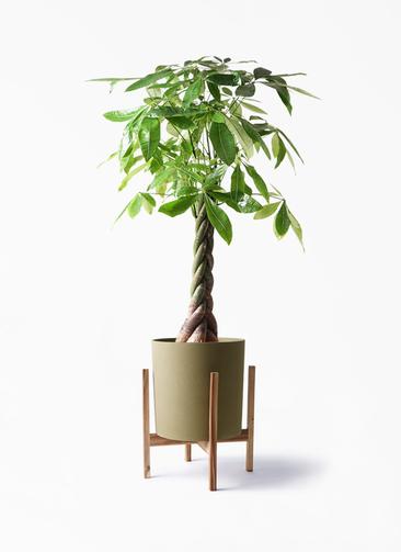 観葉植物 パキラ 8号 ねじり ホルスト シリンダー オリーブ ウッドポットスタンド付き