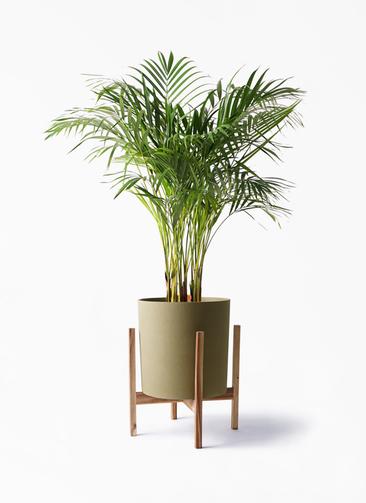 観葉植物 アレカヤシ 8号 ホルスト シリンダー オリーブ ウッドポットスタンド付き