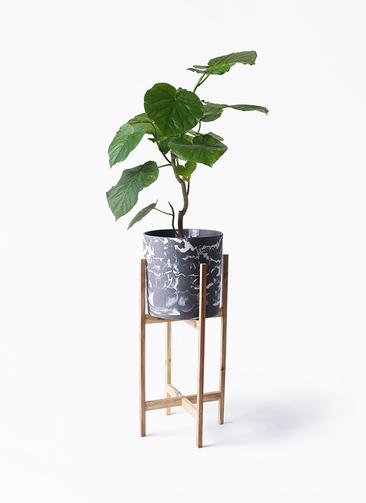 観葉植物 フィカス ウンベラータ 6号 ノーマル ホルスト シリンダー マーブル ウッドポットスタンド付き
