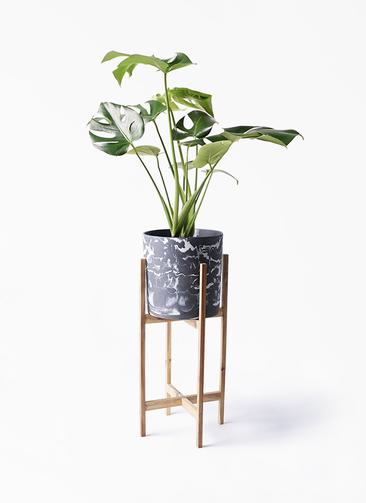 観葉植物 モンステラ 6号 ボサ造り ホルスト シリンダー マーブル ウッドポットスタンド付き