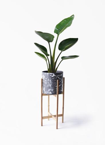 観葉植物 オーガスタ 6号 ホルスト シリンダー マーブル ウッドポットスタンド付き