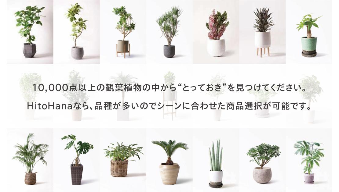 多くの品種の観葉植物