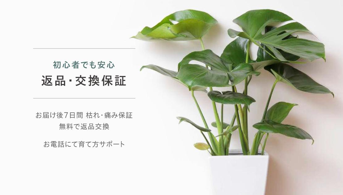 観葉植物返品交換保証