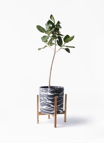観葉植物 フィカス ベンガレンシス 8号 ストレート ホルスト シリンダー マーブル ウッドポットスタンド付き