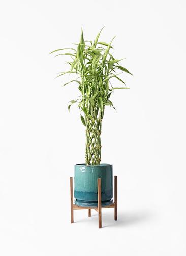観葉植物 ドラセナ ミリオンバンブー(幸運の竹) 8号 ビトロ エンデガ ターコイズ ウッドポットスタンド付き
