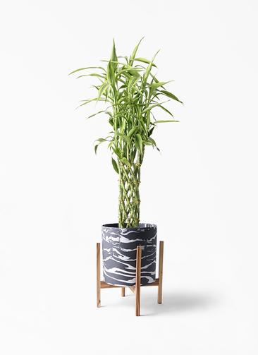 観葉植物 ドラセナ ミリオンバンブー(幸運の竹) 8号 ホルスト シリンダー マーブル ウッドポットスタンド付き