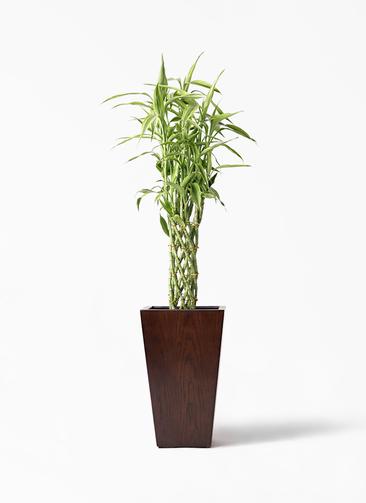 観葉植物 ドラセナ ミリオンバンブー(幸運の竹) 8号 MOKU スクエア 付き