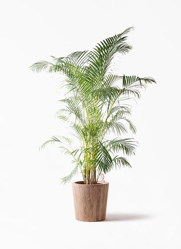 観葉植物 アレカヤシ 10号 ウッドプランター 付き