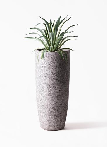 観葉植物 アガベ 7号 ベネズエラ エコストーントールタイプ Gray 付き