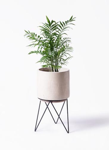 観葉植物 テーブルヤシ 7号 ビトロ エンデカ 鉢カバースタンド付 クリーム 付き