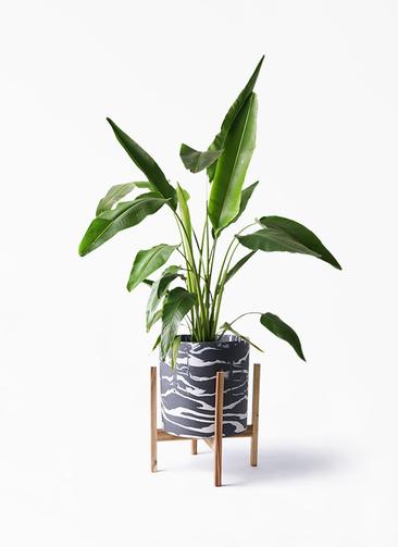 観葉植物 旅人の木 8号 ホルスト シリンダー マーブル ウッドポットスタンド付き