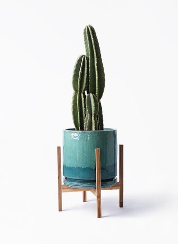 観葉植物 柱サボテン 8号 ビトロ エンデガ ターコイズ ウッドポットスタンド付き