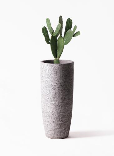 観葉植物 ウチワサボテン 8号 エコストーントールタイプ Gray 付き