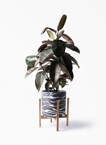 観葉植物 フィカス バーガンディ 8号 ノーマル ホルスト シリンダー マーブル ウッドポットスタンド付き