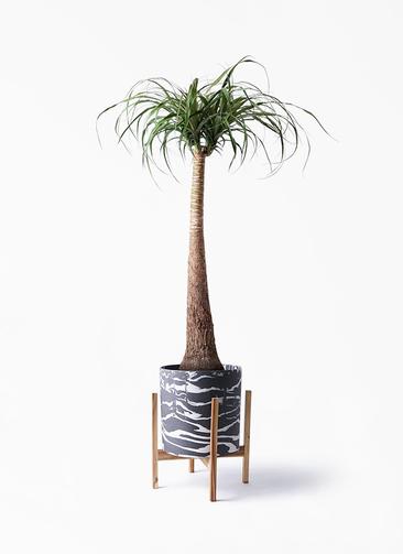 観葉植物 トックリラン ポニーテール 8号 ホルスト シリンダー マーブル ウッドポットスタンド付き