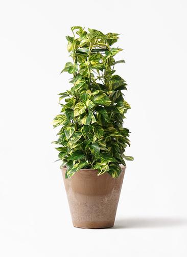 観葉植物 ポトス 8号 アートストーン ラウンド ベージュ 付き