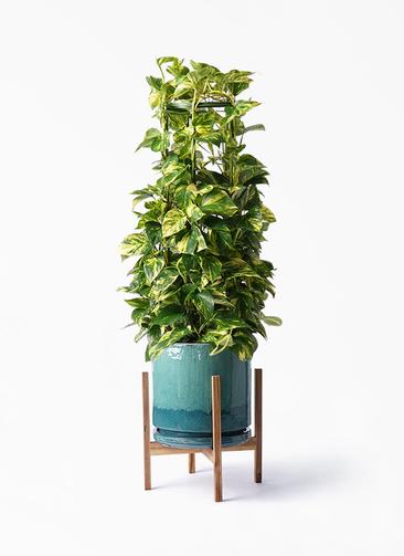 観葉植物 ポトス 8号 ビトロ エンデガ ターコイズ ウッドポットスタンド付き