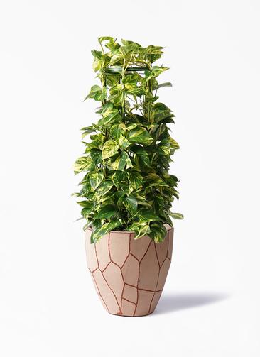 観葉植物 ポトス 8号 ウィスク 付き
