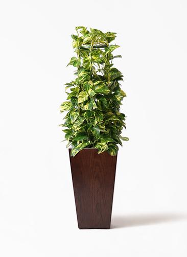 観葉植物 ポトス 8号 MOKU スクエア 付き