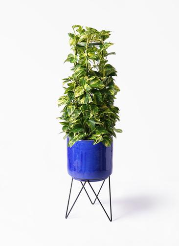 観葉植物 ポトス 8号 ビトロ エンデカ 鉢カバースタンド付 ブルー 付き