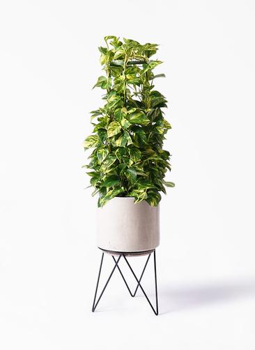 観葉植物 ポトス 8号 ビトロ エンデカ 鉢カバースタンド付 クリーム 付き