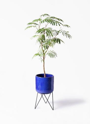 観葉植物 エバーフレッシュ 8号 ボサ造り ビトロ エンデカ 鉢カバースタンド付 ブルー 付き
