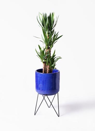 観葉植物 ユッカ 8号 ノーマル ビトロ エンデカ 鉢カバースタンド付 ブルー 付き