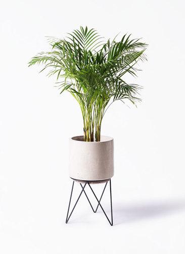 観葉植物 アレカヤシ 8号 ビトロ エンデカ 鉢カバースタンド付 クリーム 付き