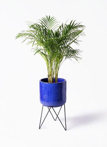 観葉植物 アレカヤシ 8号 ビトロ エンデカ 鉢カバースタンド付 ブルー 付き