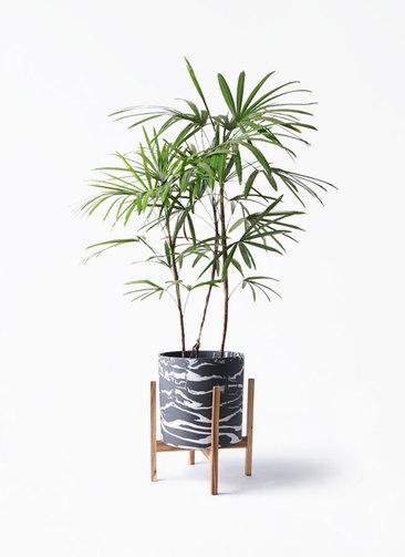 観葉植物 シュロチク(棕櫚竹) 8号 ホルスト シリンダー マーブル ウッドポットスタンド付き