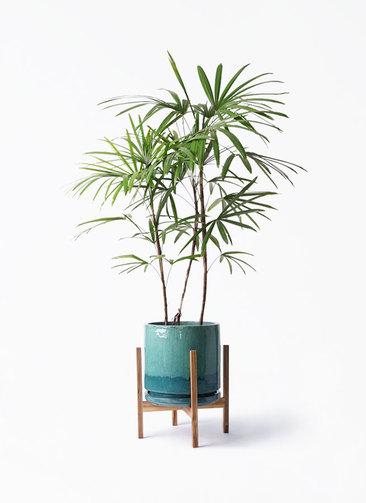 観葉植物 シュロチク(棕櫚竹) 8号 ビトロ エンデガ ターコイズ ウッドポットスタンド付き