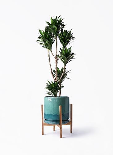 観葉植物 ドラセナ コンパクター 8号 ビトロ エンデガ ターコイズ ウッドポットスタンド付き