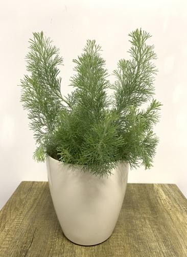 観葉植物   【50cm】 5号 #23484 ラスターポット付き