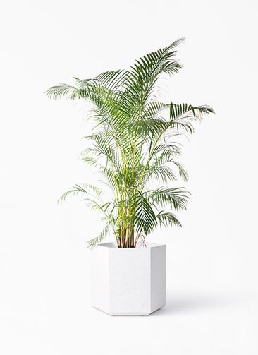 観葉植物 アレカヤシ 10号 コーテス ヘックス ホワイトテラゾ 付き
