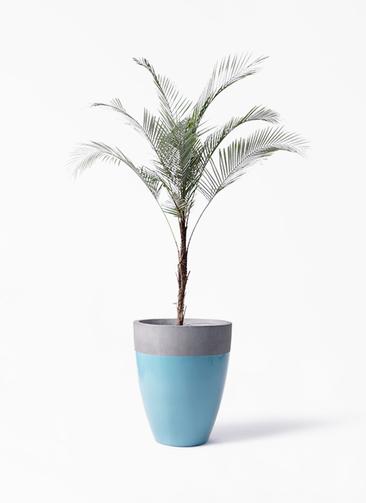 観葉植物 ヒメココス 8号 ファイバーストーンカプリ 青 付き