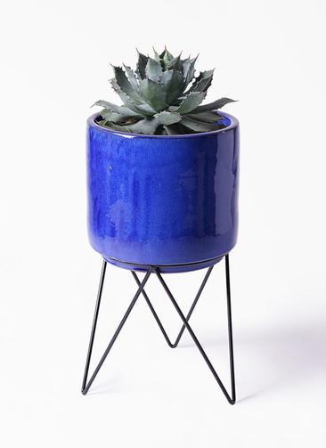 観葉植物 アガベ 9号 雷神 ビトロ エンデカ 鉢カバースタンド付 ブルー 付き