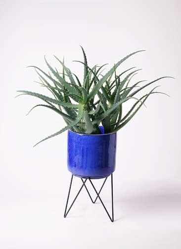 観葉植物 キダチアロエ 8号 8号ビトロ エンデカ 鉢カバースタンド付 ブルー 付き